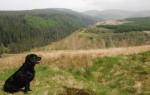 Fairy Knowe trail view
