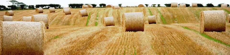 5 -  Bales of Hay, Barr village